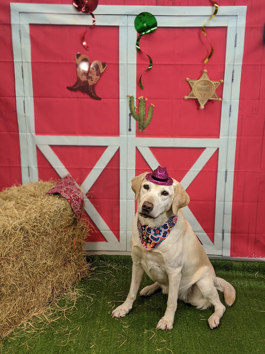 Doggie Day Camp at Pampered Pet Inn