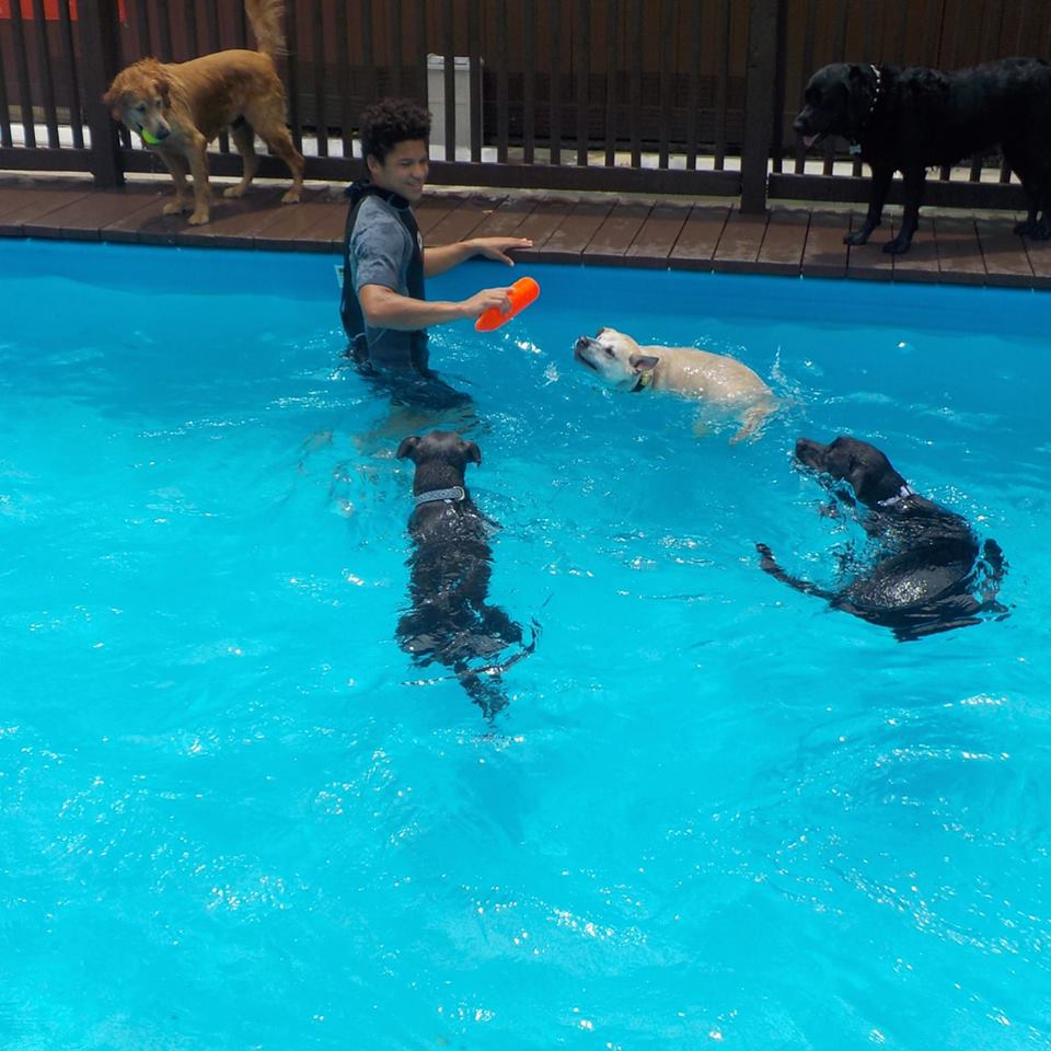 Dog Day Camp 30-Minute Group Swim Session