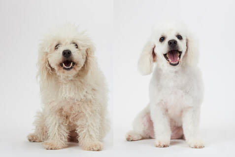 Grooming Services at Pampered Pet Inn
