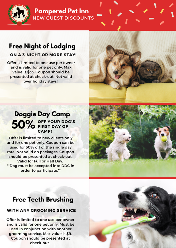 Specials at Pampered Pet Inn